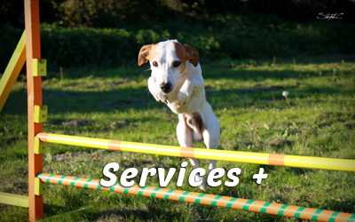 Services-Plus