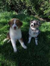 Clyde et Octavia